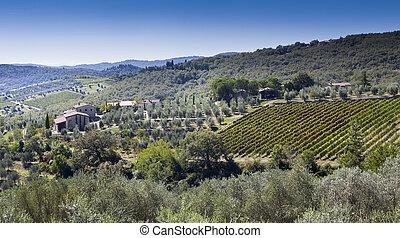 winogrono, oliva