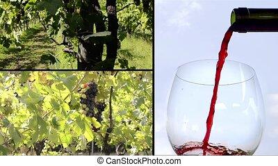 winorośle, i, wino