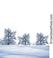 winter., árvore