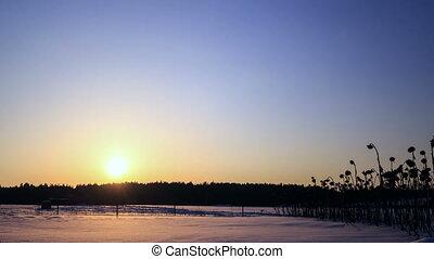 winter., étoile, défaillance, après, coucher soleil, temps
