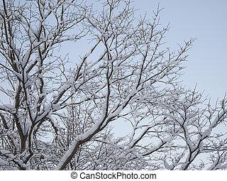 winter., πάχνη , δέντρα