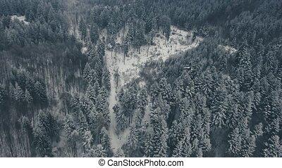 winter., хвойный, антенна, лес, дорога, посмотреть