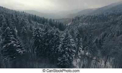 winter., хвойный, антенна, лес, посмотреть