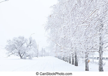 Winter alley of trees covered with white snow receding