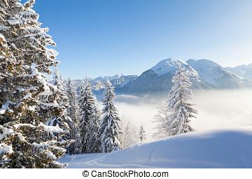 Winter Alpine View
