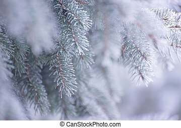 Winter and Christmas Background. Close-up Photo of Fir-tree...