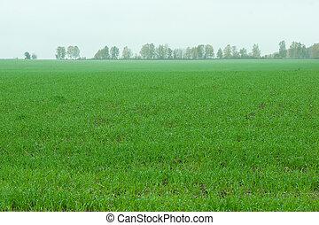 Winter-annual field