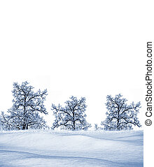 winter., arbre