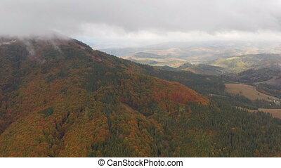 winter., automne, forêt, neigeux, automne, montagne, ou