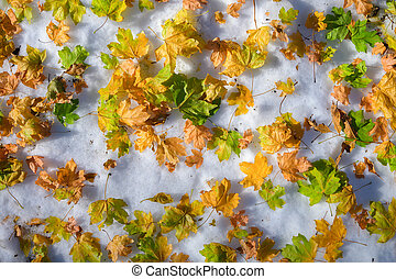 Winter autumn background top view of various fallen yellow leaves in fresh snow. Glade covered with the first snow on a cold autumn day with leaves on top