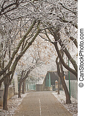 Winter avenue - A winter avenue with snow branches of trees
