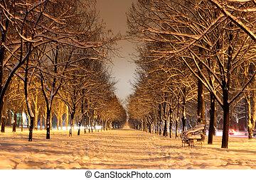 winter avenue at night