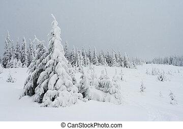 winter- bäume