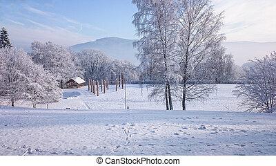 winter- bäume, in, berge, bedeckt, mit, frischer schnee