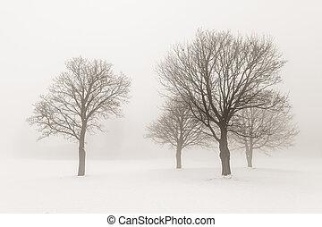 winter- bäume, in, nebel