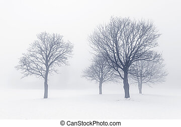 winter- bäume, in, nebel