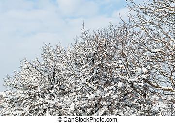winter- bäume, schnee