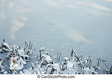 Winter background 1 - Ice sheet with some snowed bulrush on...