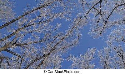 Winter background. Frozen tree on a blue sky background.