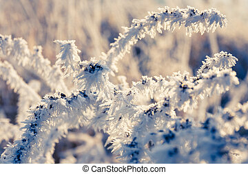 Winter background, hoarfrost on leaves, close up