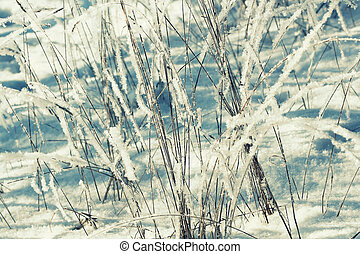 Winter background, morning frost on the grass