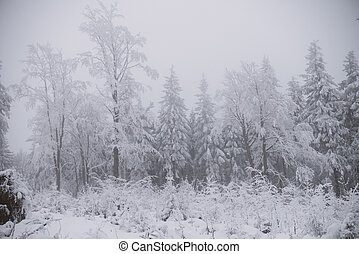 winter background, snow and fog in mountain