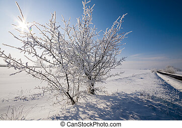 Winter backlight - Winter landscape with the backlight sun,...