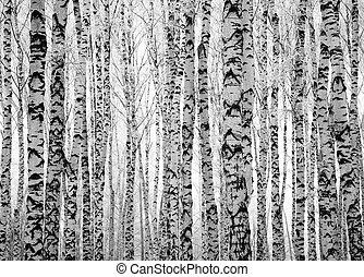 winter, badehose, birke bäume