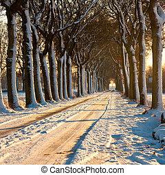 winter, beatiful, dag
