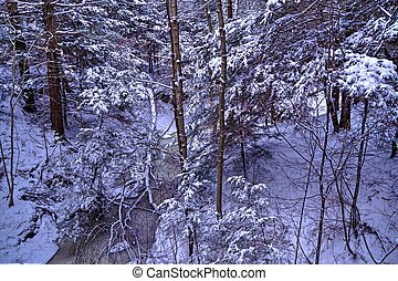 Looking into a ravine at a gorgeous winter wonderland