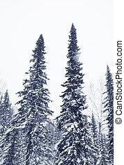 winter, bergen