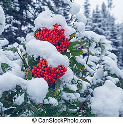 Winter berry