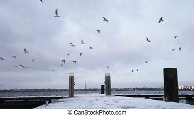 Winter berth - Snowy winter mooring and flying birds