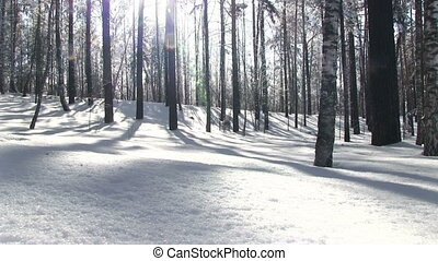 Winter birch forest with deep snow and sun backlighting