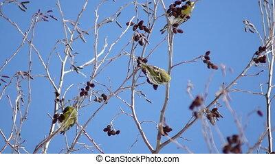 winter birds in trees