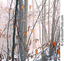 winter, bos