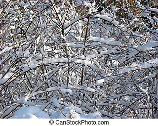 Winter branches background 1
