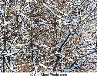 Winter branches background 3