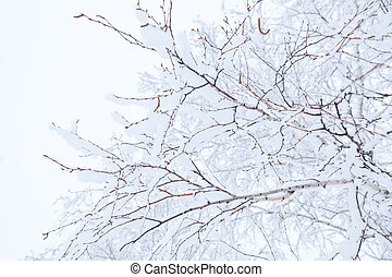 Winter branches of trees