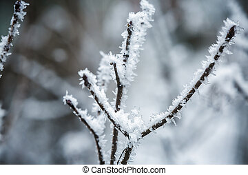 Winter branches of trees in hoarfrost