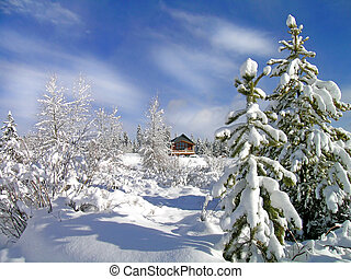Cabin in stand of pine trees covered in snow in the winter