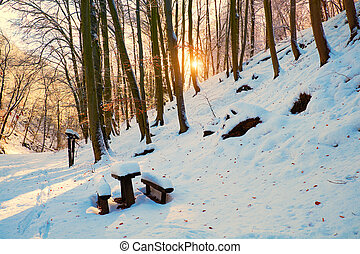 Winter camp in the forest