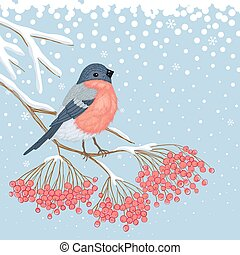 Winter Card with Bullfinch on the branch of rowan