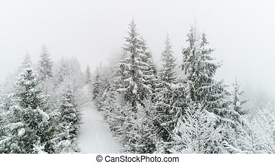 Winter Carpathian, fly over fir tree in the snowstorm. -...