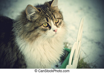Winter Cat - Cute curious kitten and winter snow background.