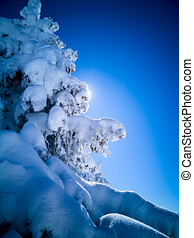 Winter Christmas background with large copy space. Spruce tree covered in snow and sun shining from behind.