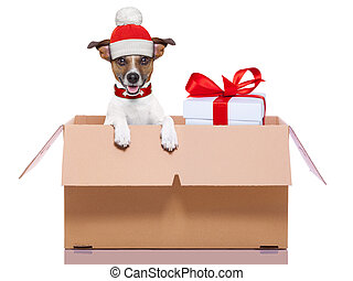 winter christmas dog - winter christmas mail dog in a very...