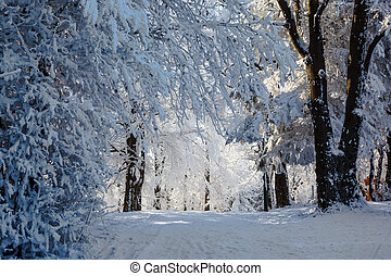 Winter Christmas morning in forest