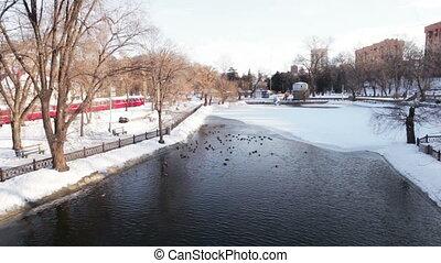 Ducks in winter unfrozen pond