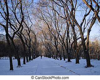 Winter cityscape. Avenue in the park. Yekaterinburg. December